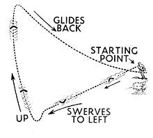 boomerang path
