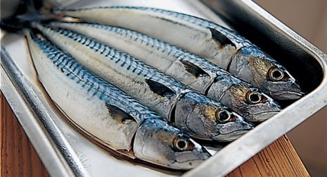 Mackerel in platter
