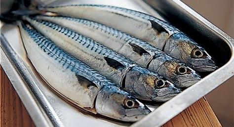Mackerel in platter